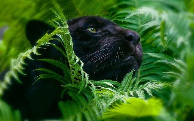 Jungle-Animals-Wild-Wallpaper-Background