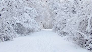 6670-perfect-snow-1920x1080-nature-wallpaper