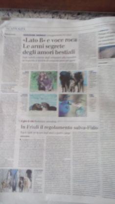 amorebestiale_giornale